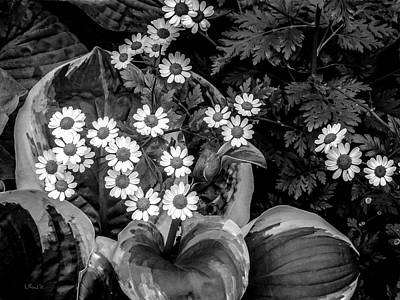 White Wall Art - Photograph - Hosta Daisies by Bill Linn