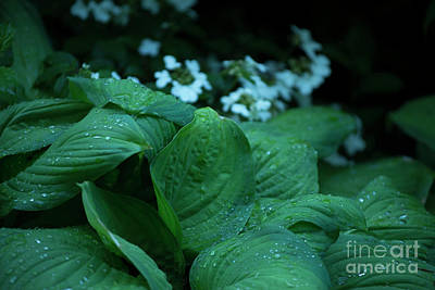 Photograph - Hosta by David Bearden