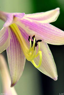 Photograph - Hosta Flower by Lisa Wooten