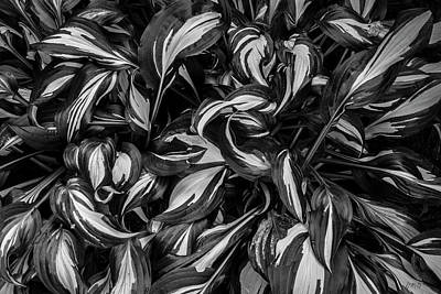 Photograph - Hosta II Bw by David Gordon