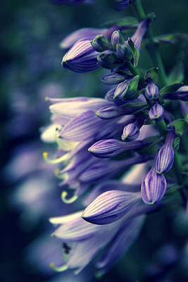 Photograph - Hosta Petals by Jessica Jenney
