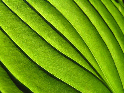 Mountians Photograph - Hosta Leaf 2 by Dustin K Ryan