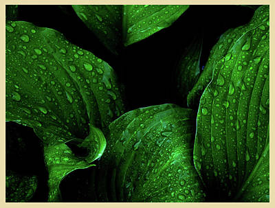 Photograph - Hostas After The Rain I by Leon De Vose