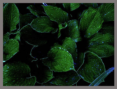 Photograph - Hostas After The Rain II by Leon De Vose