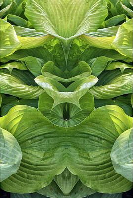 Photograph - Hostra Leaves Up Pareidolia  by Constantine Gregory