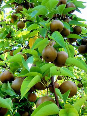 Hosui Asian Pear Tree 8 Art Print by Lanjee Chee