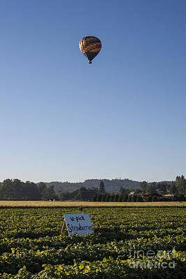 Photograph - Hot Air Balloon Over You Pick Field Of Strawberries by Jim Corwin