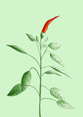 Hot Chili Pepper Plant Botanical Illustration Art Print