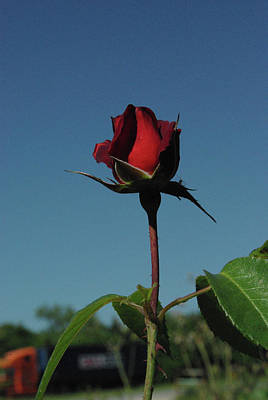 Photograph - Hot Cocoa Rosebud by Robyn Stacey