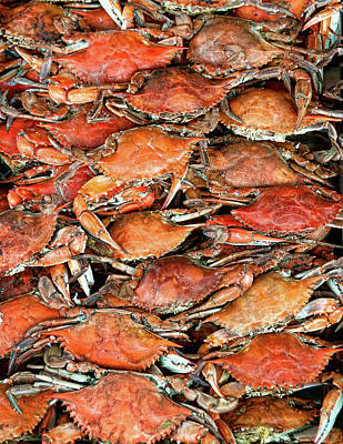 Food And Drink Photograph - Hot Crabs by Sky Noir Photography by Bill Dickinson