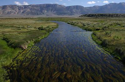 Photograph - Hot Creek by Tom Kidd