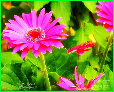 Photograph - Hot Flowers by Bobbee Rickard