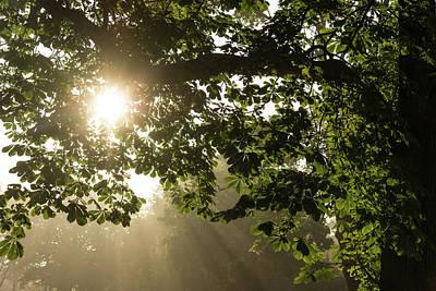 Photograph - Hot Golden Mists Of Summer by Georgia Mizuleva
