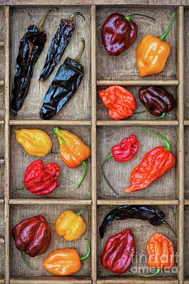 Chili Pepper Photograph - Hot Off The Grid by Tim Gainey