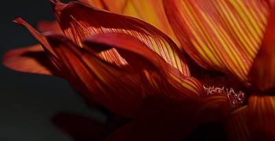 Hot Orange Sunflower Art Print by Nadalyn Larsen