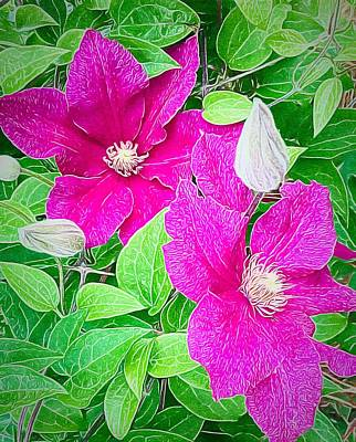 Photograph - Hot Pink Clematis by Anne Sands