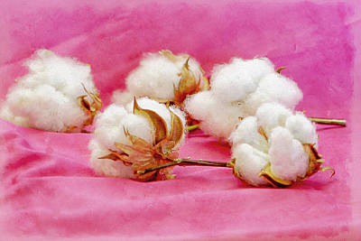 Farm Photograph - Hot Pink Cotton by Jackie Riesland