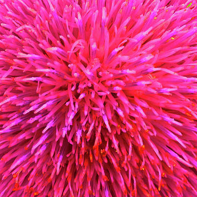Photograph - Hot Pink Floral Abstract by Marcia Socolik
