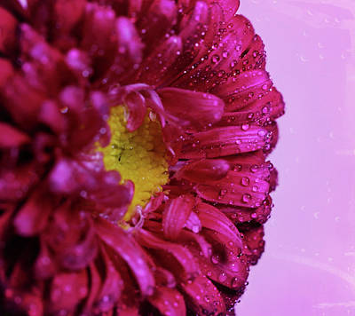 Photograph - Hot Pink by Judy Vincent