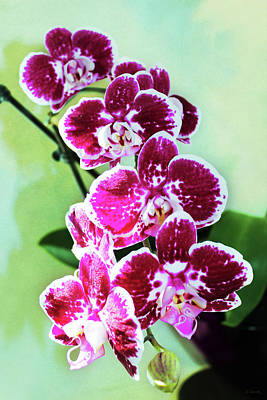 Photograph - Hot Pink Moth Orchid by Shawna Rowe