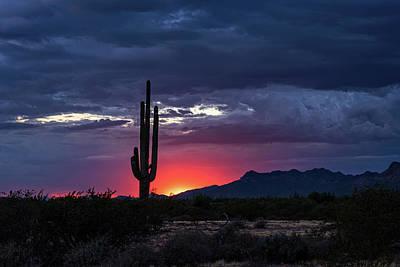 Art Print featuring the photograph Hot Pink Saguaro Sunset  by Saija Lehtonen