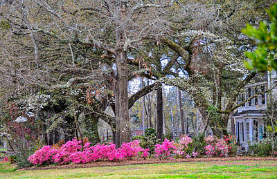 Photograph - Hot Pink Spring by Linda Brown