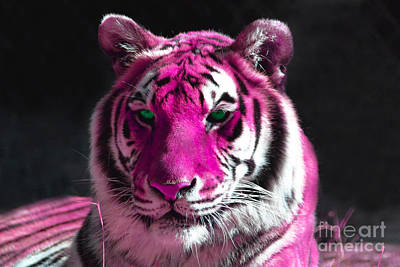 Hot Pink Tiger Art Print