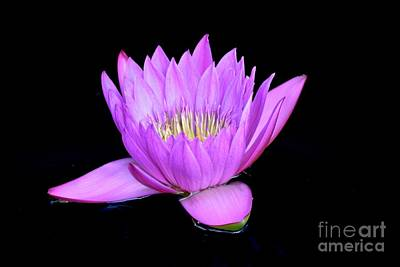 Photograph - Hot Pink Water Lily  by Jeannie Rhode