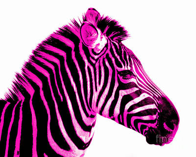 Zebra Photograph - Hot Pink Zebra by Rebecca Margraf