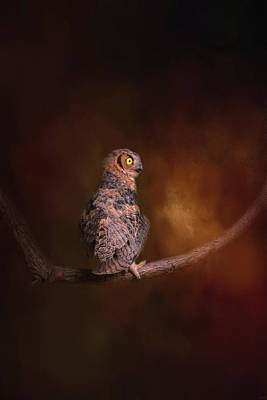 Photograph - Hot Summer Night Owl Art By Jai Johnson by Jai Johnson