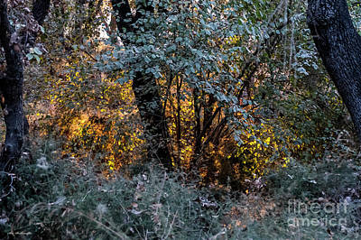 Photograph - Hot Sunset In The Forest by Arik Baltinester