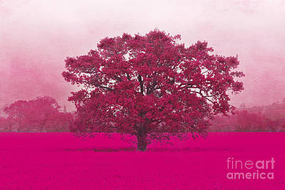 Photograph - Hot Tree In A Field Of Pink by Terri Waters