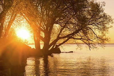 Photograph - Hot Velvety Sunshine On The Shore Of The Lake by Georgia Mizuleva