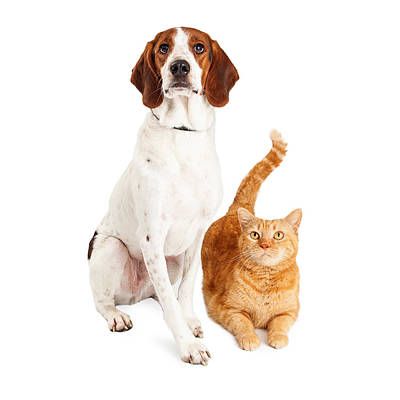 Hound Dog And Orange Cat Together Print by Susan Schmitz