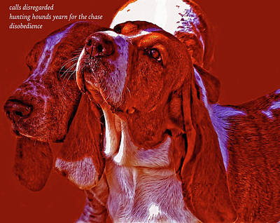 Photograph - Hounds Haiku by Constantine Gregory