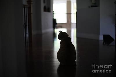 Photograph - Hourglass Cat by Jason Gallant