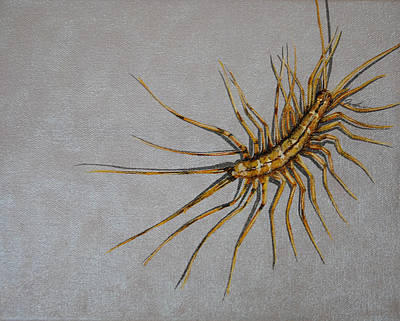 House Centipede Art Print