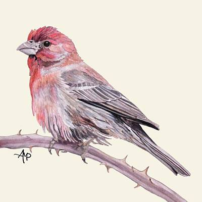 Red Finch Painting - House Finch by Angeles M Pomata