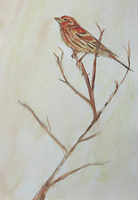 Painting - House Finch  by Kara Evelyn-McNeil
