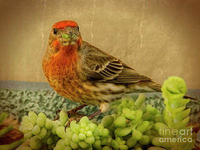 Photograph - House Finch by Mariola Bitner