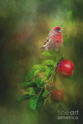 Photograph - House Finch On Apple Branch by Janette Boyd