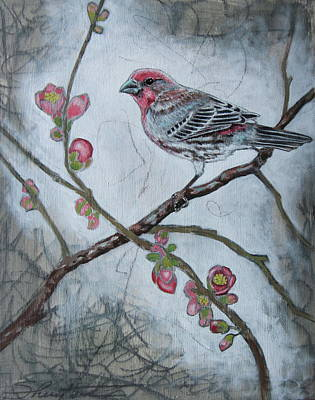 Finch Mixed Media - House Finch by Sheri Howe