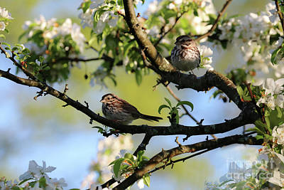 Photograph - House Finches In Spring by Sandra Huston
