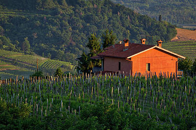 Photograph - House In The Vineyard - Slovenia by Stuart Litoff