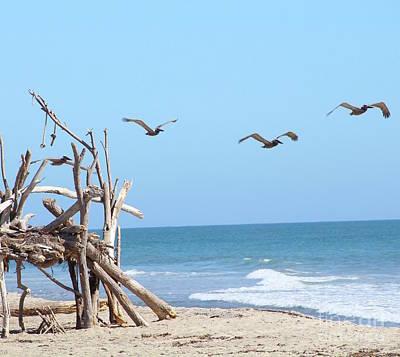 House Of Sticks Trestles Beach California Art Print