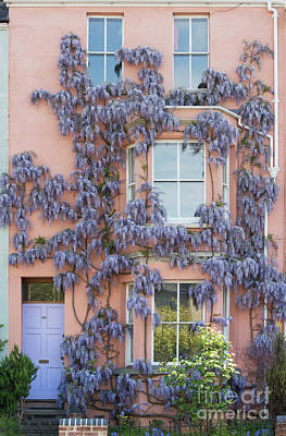 Photograph - House Of Wisteria by Tim Gainey