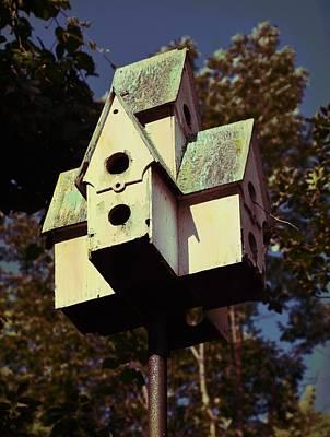Photograph - House Sparrow by JAMART Photography