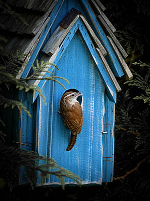 Photograph - House Wren by David Kay