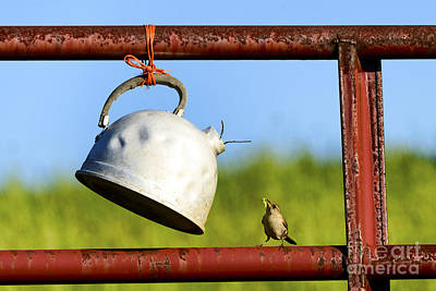 Feeding Young Photograph - House Wren Feeding Offspring by Thomas R Fletcher