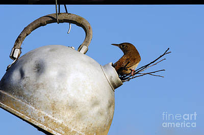 House Wren In New Home Art Print by Thomas R Fletcher